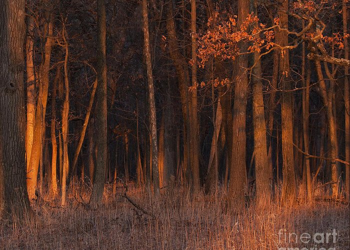 Sunset Greeting Card featuring the photograph Forest At Sunset by Emma England