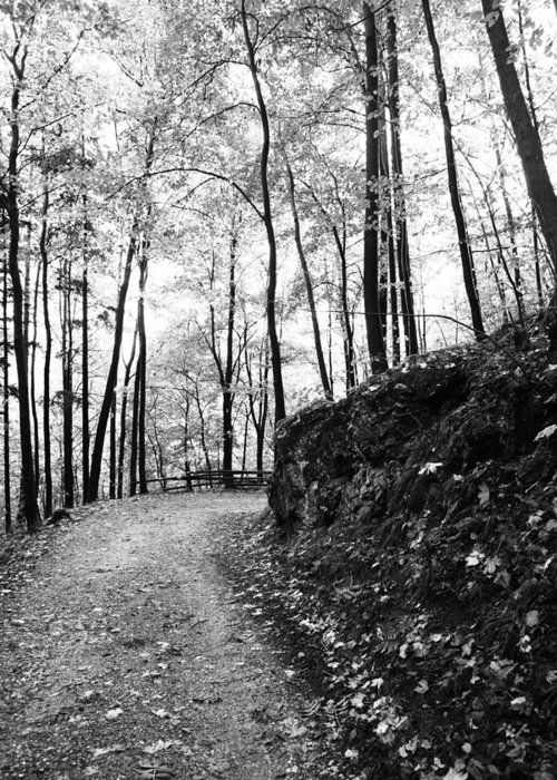 Wald Schwarz Weiß Greeting Card featuring the photograph Forest Black And White 6 by Falko Follert
