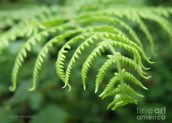 Fern Greeting Card featuring the photograph Forest Fern by Lainie Wrightson