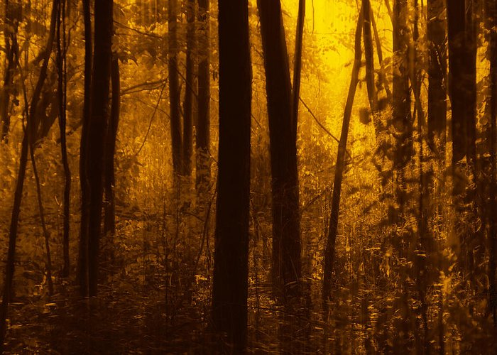 Forest Greeting Card featuring the photograph Forest Glow by Jim Vance