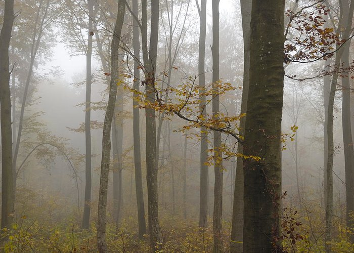 Trees Greeting Card featuring the photograph Forest In Autumn by Matthias Hauser