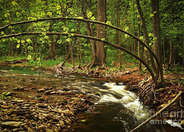 Waterfall Greeting Card featuring the photograph Forest River by Elena Elisseeva
