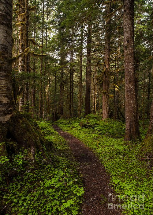 Northwest Greeting Card featuring the photograph Forest Serenity Path by Mike Reid