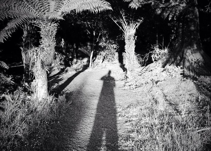 Silhouette Greeting Card featuring the photograph Forest Shadow by Les Cunliffe