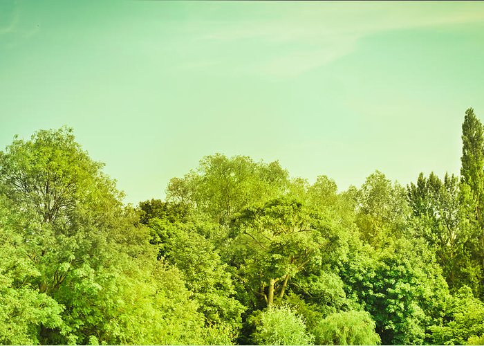Background Greeting Card featuring the photograph Forest by Tom Gowanlock