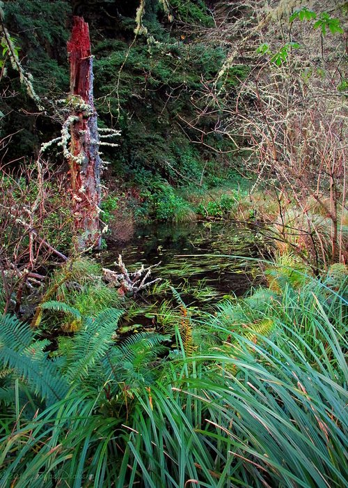 Forest Greeting Card featuring the photograph Forest Wetlands II by Joyce Dickens