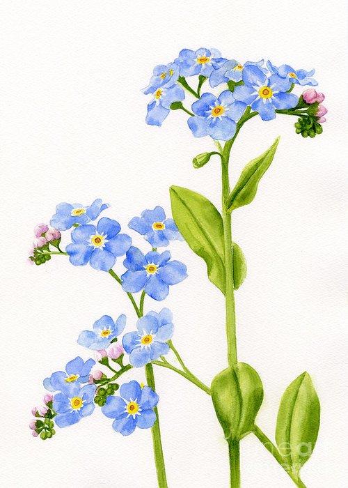 Botanical Art Greeting Cards