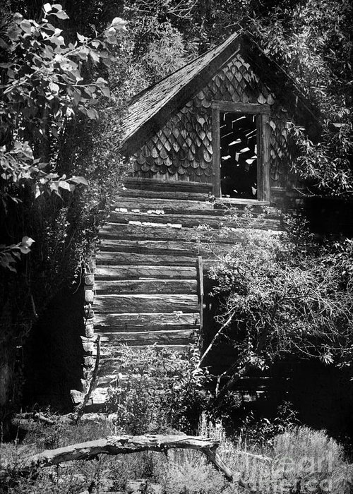 History Greeting Card featuring the photograph Forgotten Log Cabin by Cindy Singleton