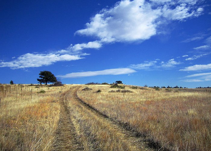 Country Road Greeting Card featuring the photograph Forgotten Road by Julie Magers Soulen