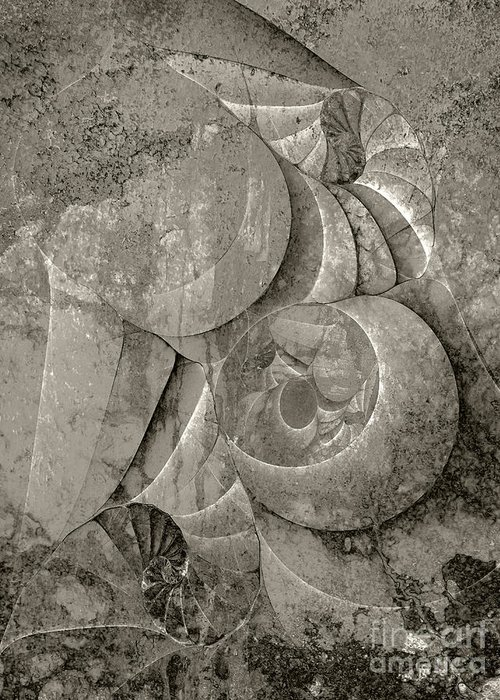 Fossilized Shell Greeting Card featuring the digital art Fossilized Shell - B And W by Klara Acel