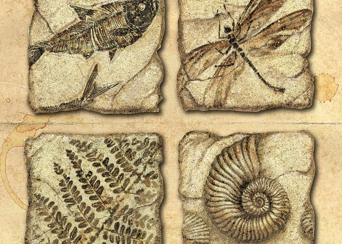 Jon Q Wright Greeting Card featuring the painting Fossils by JQ Licensing