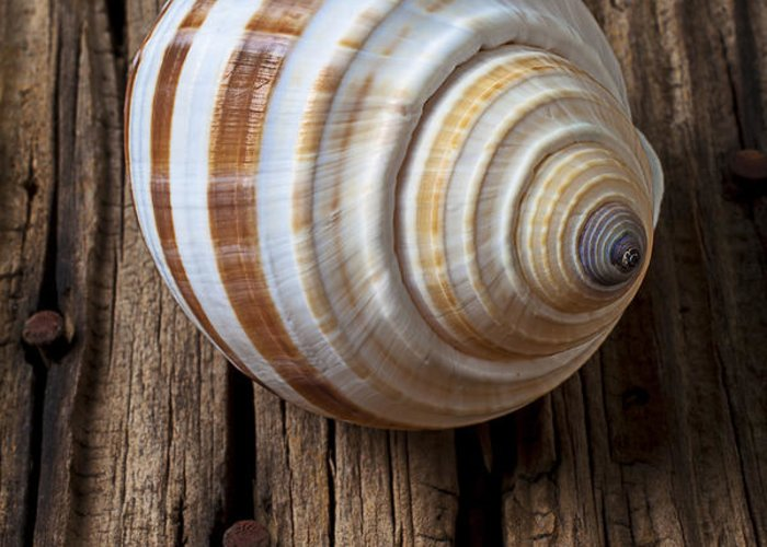 Sea Shell Greeting Card featuring the photograph Found Sea Shell by Garry Gay