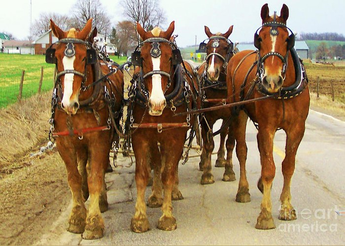 Horses Greeting Card featuring the photograph Four Horse Power by B Wayne Mullins