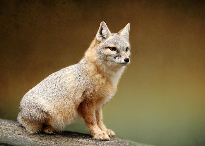 Foxes Greeting Card featuring the photograph Foxes by Heike Hultsch