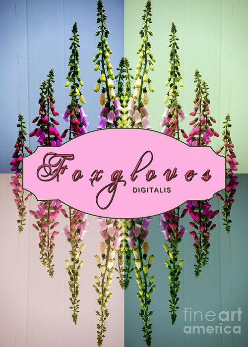 Foxgloves Greeting Card featuring the photograph Foxgloves Times 4 by Margaret Newcomb