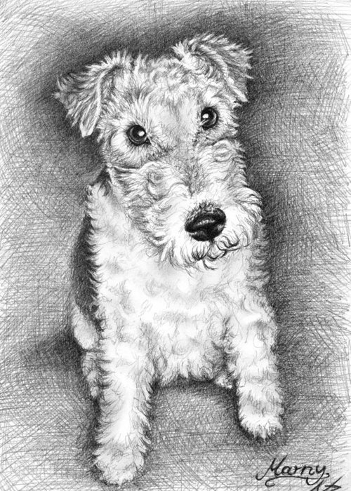 Dog Greeting Card featuring the drawing Foxterrier by Nicole Zeug