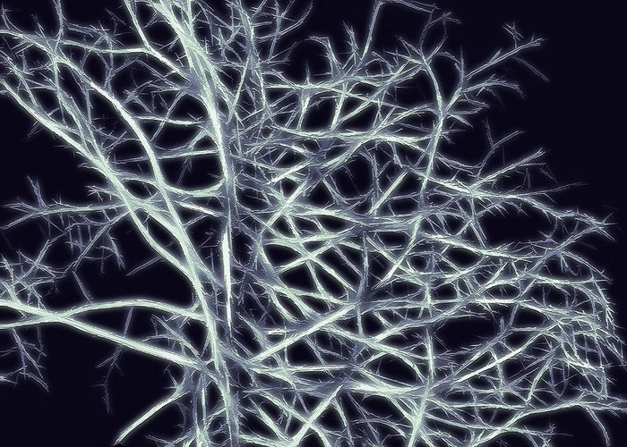 Abstract Greeting Card featuring the photograph Fractal Ghost Tree by Steve Ohlsen