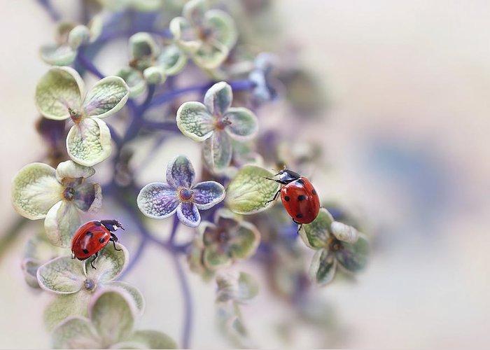Ladybug Greeting Cards