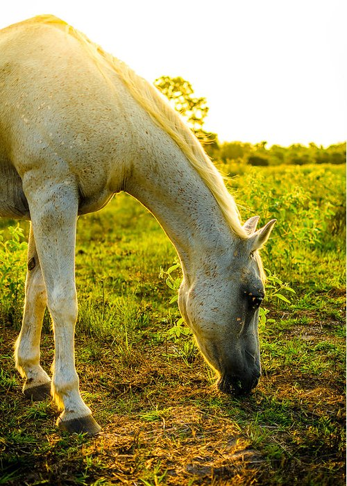 Horse Greeting Card featuring the photograph Freckles At Sunset by David Morefield