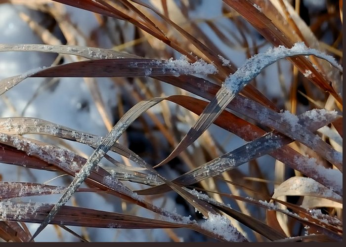 Grasses Greeting Card featuring the photograph Freeze Dried by Steven Milner