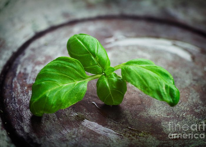 Aroma Greeting Card featuring the photograph Fresh Basil by Mythja Photography