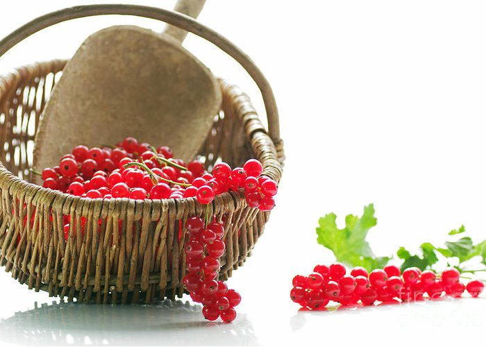 Nutrition Greeting Card featuring the photograph Fresh Currants by Tanja Riedel
