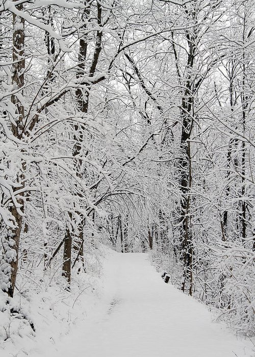 Battelle Darby Creek Metro Park Greeting Card featuring the photograph Fresh Fallen Snow by David Yunker