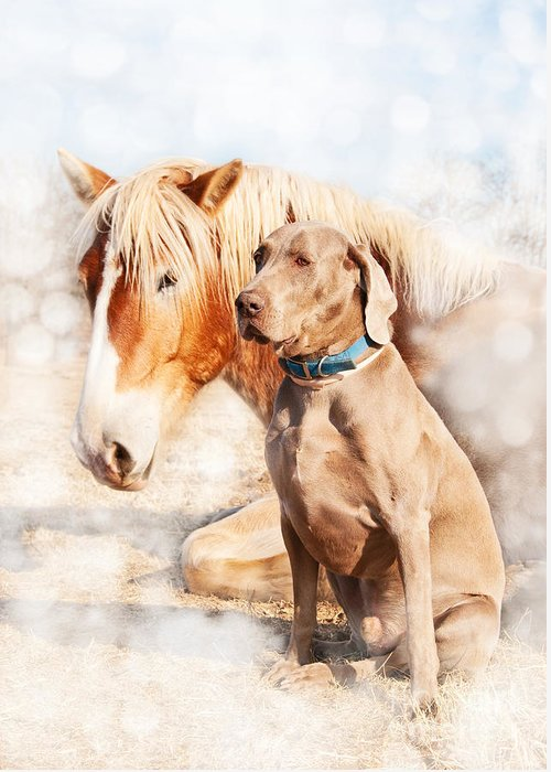 Weimaraner Greeting Card featuring the photograph Friends by Sari ONeal