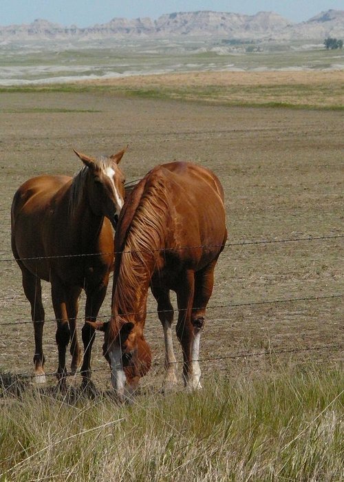 Horses Greeting Card featuring the photograph Friends by Valerie Jean Schafer