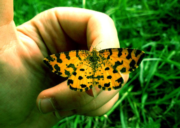 Butterfly Greeting Card featuring the photograph Friendship by Lucy D