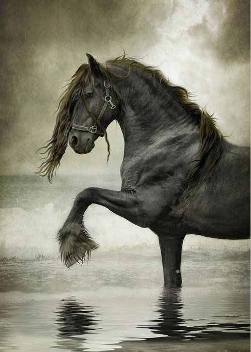 Friesian Greeting Cards