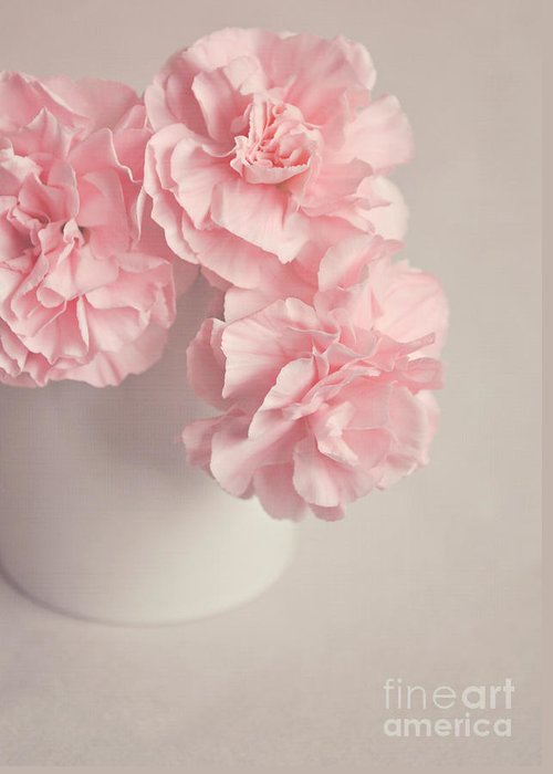 Flowers Greeting Card featuring the photograph Frilly Pink Carnations by Lyn Randle