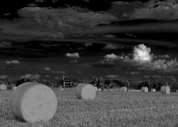Hay Bales Greeting Card featuring the photograph Frisco Dream by Darryl Dalton