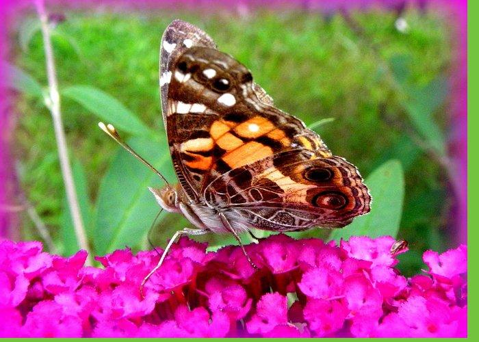 Fritillary Butterfly Greeting Card featuring the photograph Fritillary Butterfly by Kim Galluzzo Wozniak