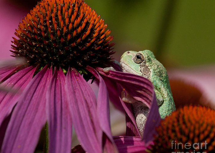 Frog Greeting Card featuring the photograph Frog And His Cone by Jan Killian