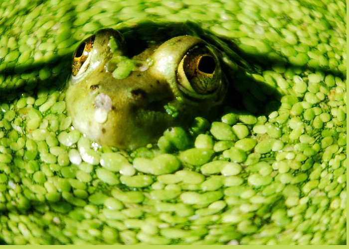 Green Algae Greeting Card featuring the photograph Frog Eye's by Optical Playground By MP Ray