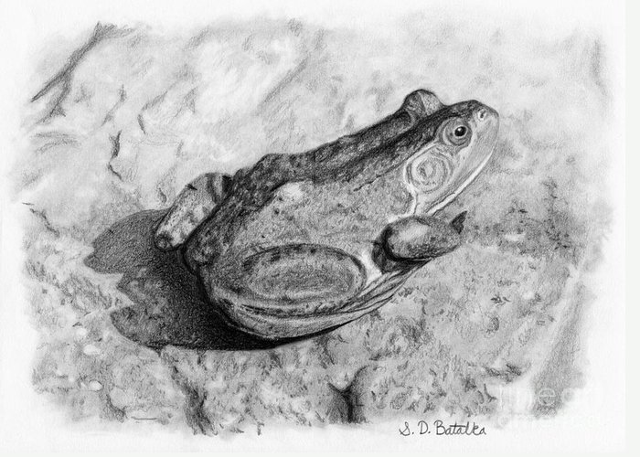 Frog Greeting Card featuring the drawing Frog On Rock by Sarah Batalka