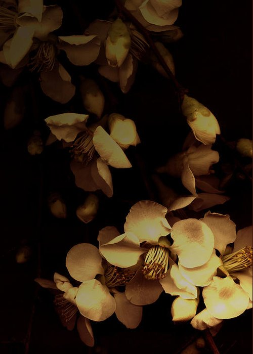 Blossoms Greeting Card featuring the photograph From The Darkness Into The Light by Ann Powell