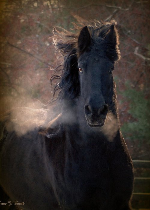 Horses Greeting Card featuring the photograph Frost by Fran J Scott
