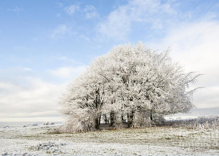 Blue Greeting Card featuring the photograph Frosted Copse by Anne Gilbert