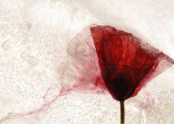 Poppy Greeting Card featuring the photograph Frosted Poppy by Henrique Souto