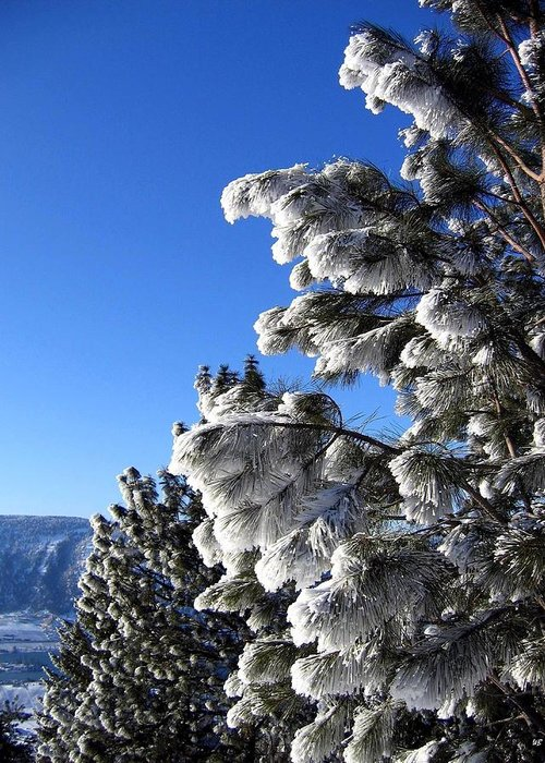 Frost Greeting Card featuring the photograph Frosty Limbs by Will Borden