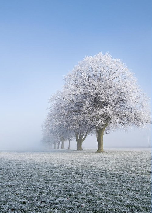 Frost Greeting Card featuring the photograph Frosty Morning by Joe Bull