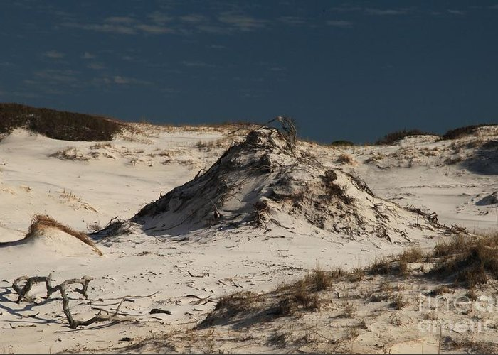 St Joseph Peninsula State Park Greeting Card featuring the photograph Frosty White Dunes by Adam Jewell