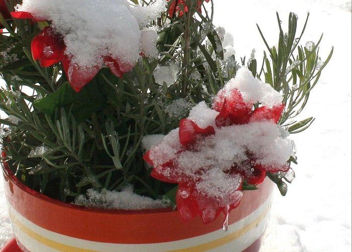 Christmas Greeting Card featuring the photograph Frozen Christmas Flowers by Deborah A Andreas