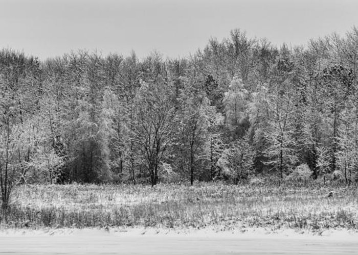 B&w Greeting Card featuring the photograph Frozen by Sebastian Musial