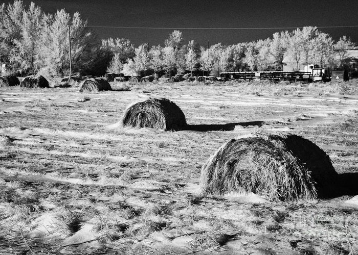Frozen Greeting Card featuring the photograph frozen snow covered hay bales in a field Forget Saskatchewan Canada by Joe Fox
