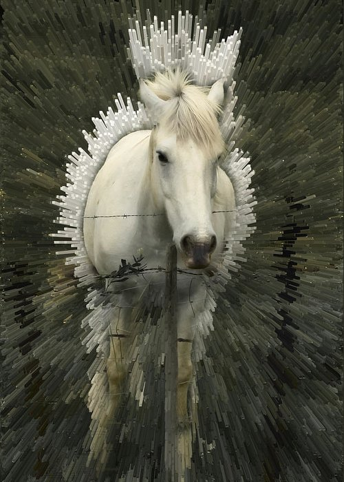 Horse Greeting Card featuring the photograph Fun With Extrude Tool by Jim Painter