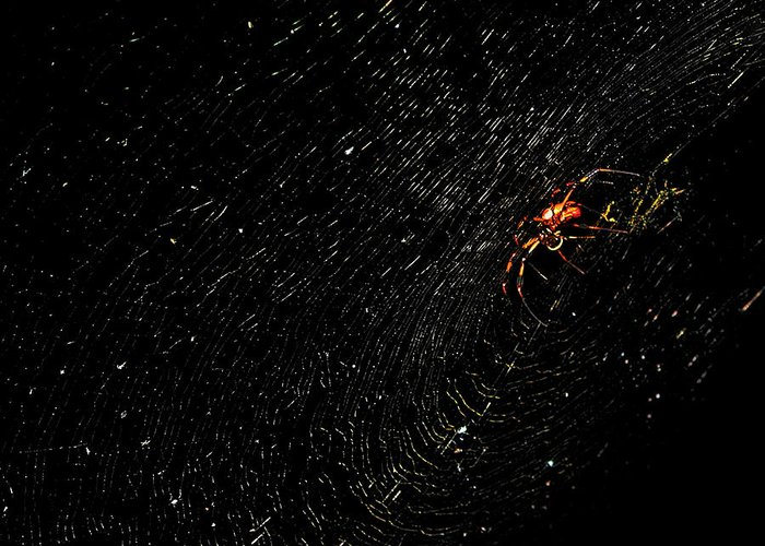 Spider Web Photograph Canvas Print Greeting Card featuring the photograph Galaxy Web by Lucy VanSwearingen