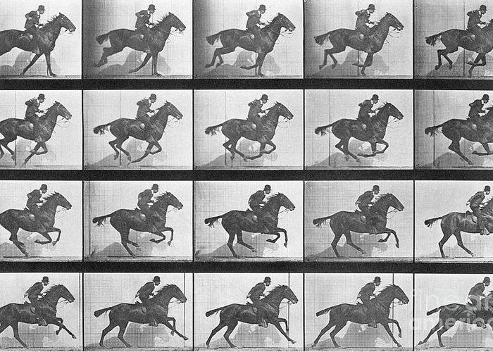 Muybridge Greeting Card featuring the photograph Galloping Horse by Eadweard Muybridge